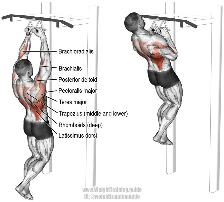 close neutral grip pull up  a compound pull exercise