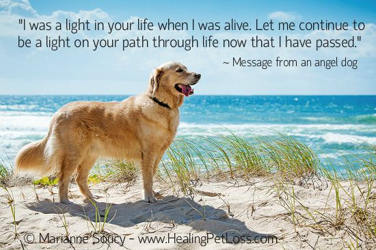 An angel dog's message to a woman who can't forgive herself for not being there when her dog died. http://healingpetloss.com/how-can-i-forgive-myself-and-move-on-when-i-was-not-there-when-my-dog-died/ #petloss #animalcommunication