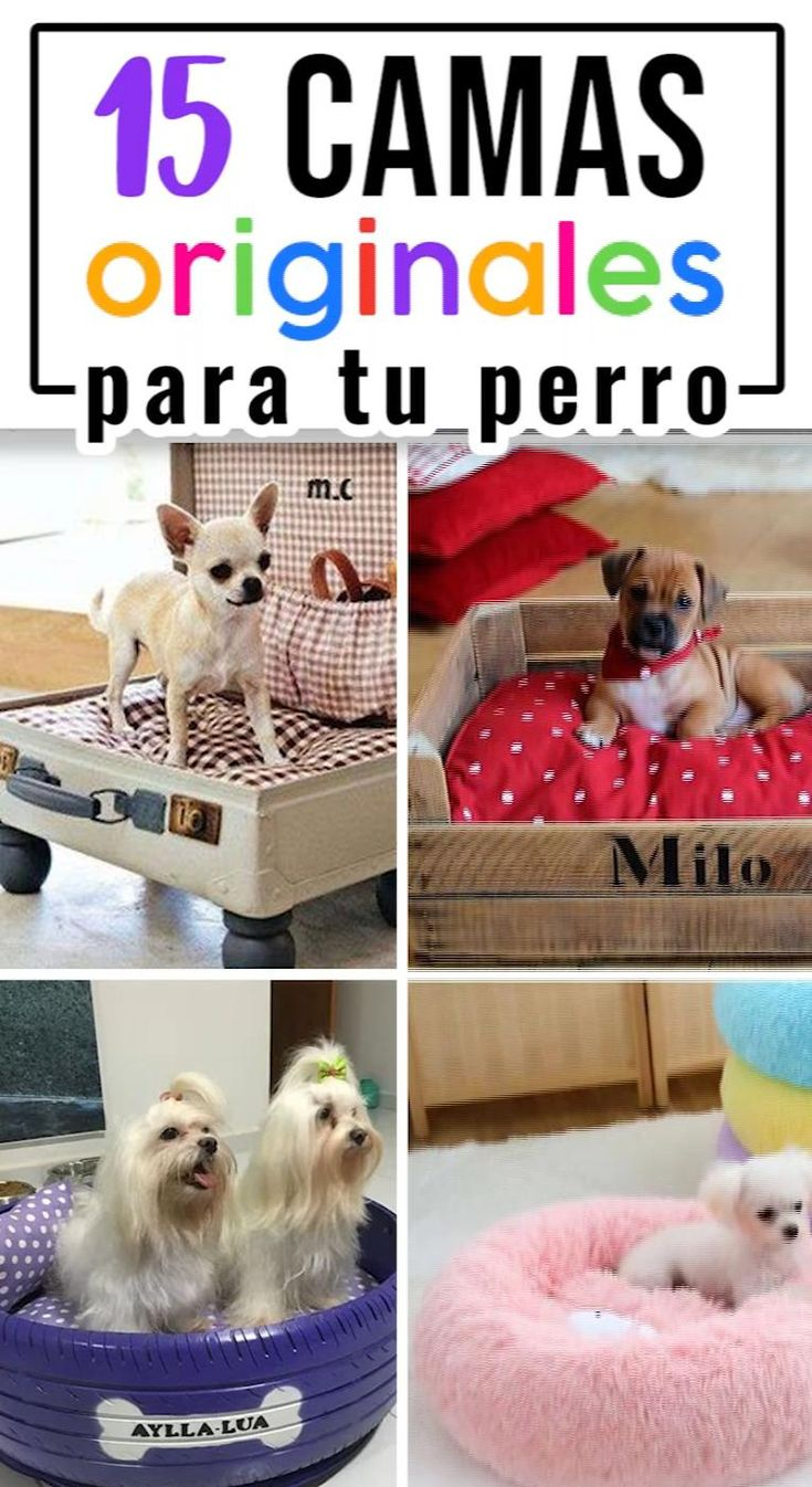 Ideas de camas muy originales para tu perrito Dog Training Treats, Crazy Hat Day, Diy Dog Bed, Turtle Love, Smiling Dogs, Working Dogs, Diy Stuffed Animals, Your Dog, Dog Lovers