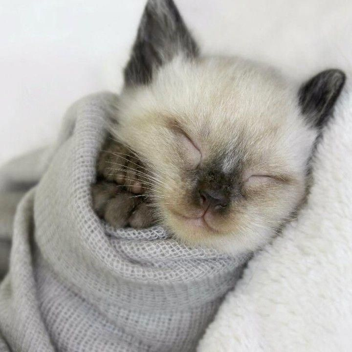 Feelin The Early Morning Blues These Animals Wrapped Like Burritos Will Fill You With Glee Catsandkittens Cats Kittens Cutest Cute Animals