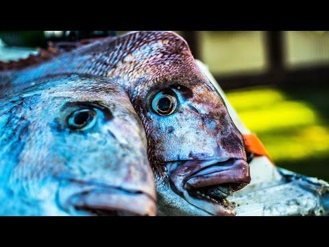 Snapper Snatchers Rigs Flasher Rig Reedy's Rigz Fishing Tackle