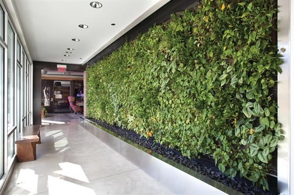 Living wall systems like this one in a minneapolis for Living wall systems