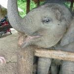 Thai Elephant Conservation Center - Lampang - Reviews of Thai Elephant Conservation Center - TripAdvisor