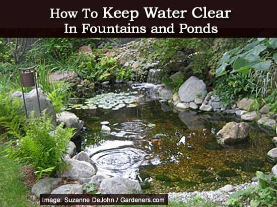 How to Keep Water Clear in Fountains and Ponds @Emma Zangs Walters Thought you might be interested in this.