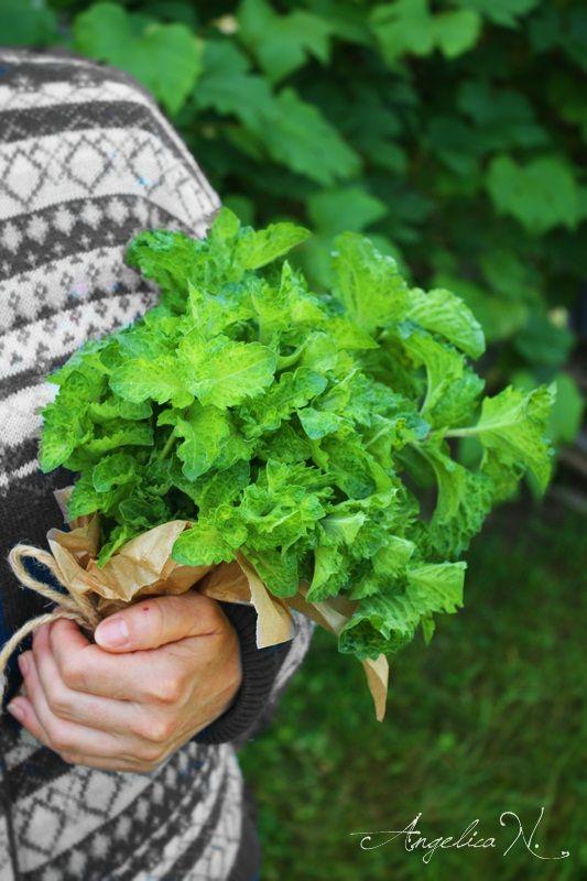 Frumoasa viata la tara...plante pentru ceaiuri