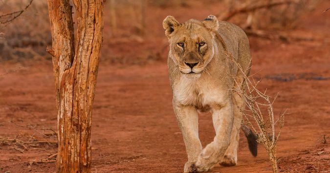 Is Madikwe the best malaria-free Big 5 safari experience? - Africa Geographic