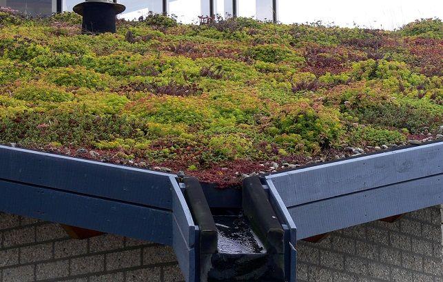 Telhados Verdes em João Pessoa podem ser obrigatórios  em novas edificações #telhadoverde #greenroof