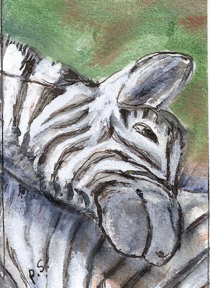 ACEO Zebras BLACK & WHITE Painting Illustration Art NFAC OCT Penny Lee StewArt #Miniature