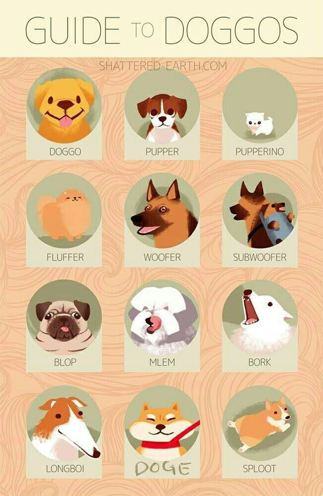 Guide to doggos