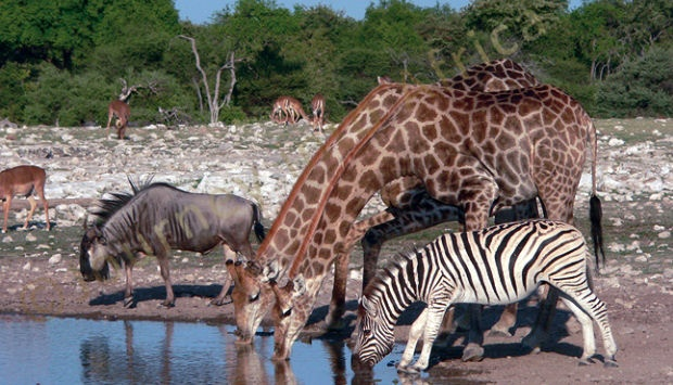 A Kruger Safari not to be missed experience.