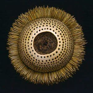 """Pine Ball II, 1996 by Kyoung Ae Cho. (sculpture with pine needles and burn marks on wood)  3 1/2"""" x 4 1/2"""" x 4 1/2"""""""