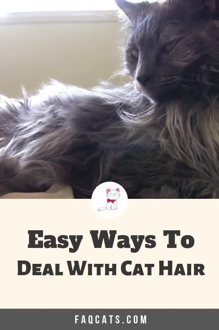 Cats Catbreeds Cathair Kittens Shedding Dealing With Tired Of Dealing With Cat Hair And Fur All Over Your Furnitur In 2020 Cat Hair Cat Advice Cat Care Tips