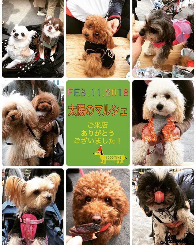 続きまして太陽のマルシェ日曜日2/11に遊びにに来てくれたワンコちゃんたちです また遊びに来てくださいね  They visited our shop at the Marche on 2/11.    #angeravi #dogwear #dog #doggie #dogstagram #lovedogs #ワンコ服 #犬服 #ペット服 #犬 #ワンコ #わんこ #寵物衣服 #doglover #dogofinstagram  #modeldog #dogfashion #太陽のマルシェ #東京イベント #勝どき #farmersmarket #streetmarket #shopping #weekend #週末 #お出かけ #weekendouting #familyouting #ファーマーズマーケット