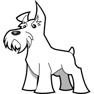 find this pin and more on schnauzer