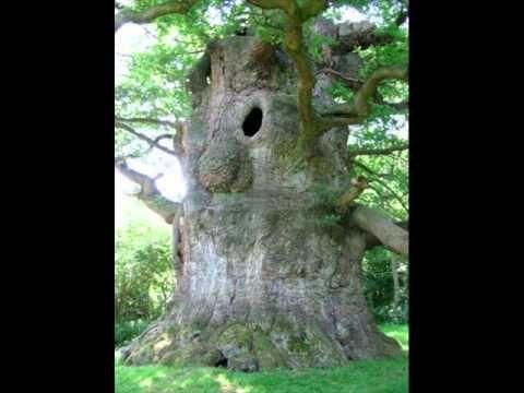 wandelende boom.wmv de link naar de muziek! 1van de. Avorieten van alle kinderen!!