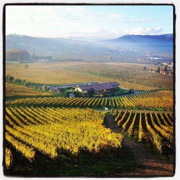 """@roncocalino's photo: """"Autunno in Franciacorta. Autumn in Franciacorta. #franciacorta #vino #vigneti #autunno #giallo #rosso #arancione #wine #vineyards #autumn #yellow #red #orange #italia #italy #lombardia #instaitalia"""""""