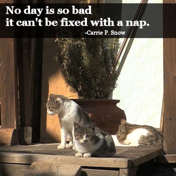 No Day Is So Bad It Can 39 T Be Fixed With A Nap Carrie P Snow
