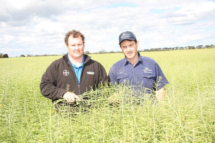 Grower Mark Wandel and Bayer Area Manager Reece Hunt in Mark's IH50RR #canola #field | Esperance, Western #Australia.