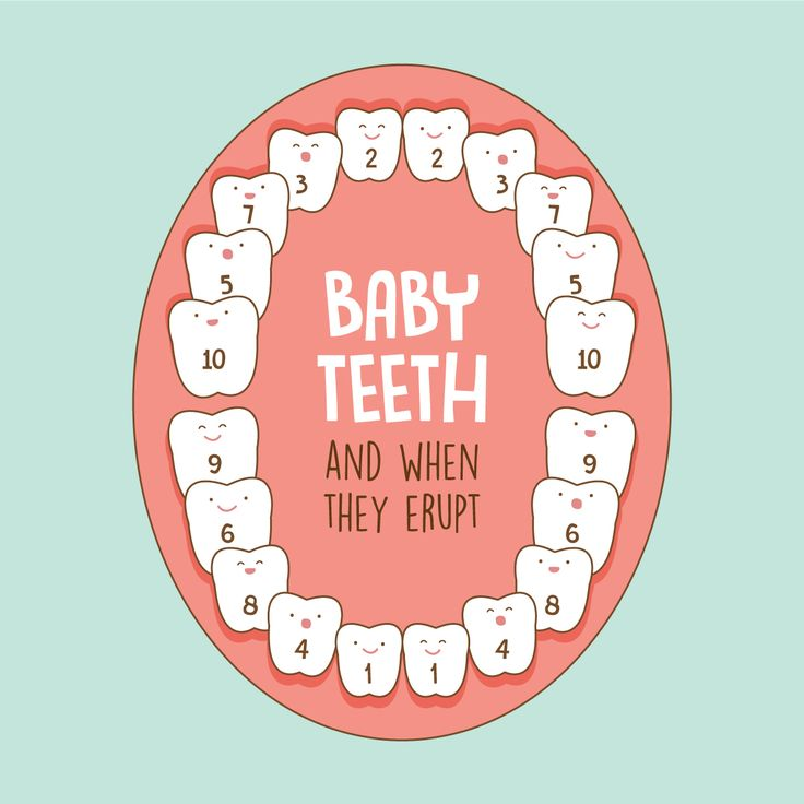 did you know that baby teeth erupt in a particular order ... baby gums diagram #8