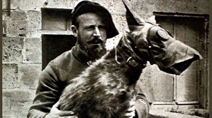 Cachorro salvou a vida de 10 mil soldados franceses na 1ª Guerra Mundial-: Estima-se que aproximadamente 50 mil cães foram utilizados durante a gue...