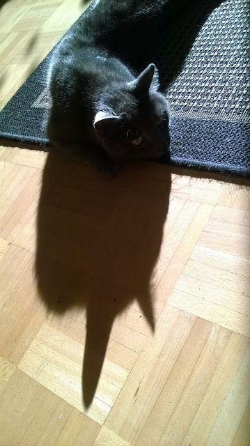 Portfolio Multimedeia 2: Ikuisaiheet, kissa, valo ja varjo