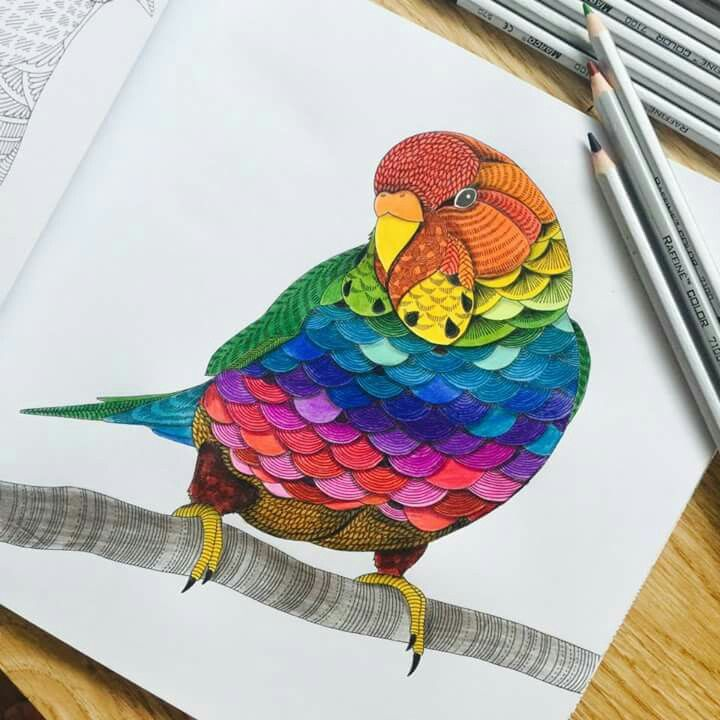 17 Best Images About Tropical World Colored Pages On
