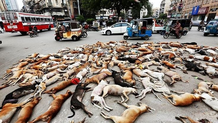 Warning: Dead dogs shown in the video lying on the streets.    https://www.youtube.com/watch?v=olEf82o2ty0    Thousands of dogs are being killed in the streets of almost all the cities of Pakistan as the Government of Pakistan killsmore than 50,000 dogs each year.   The government of Pakistan has no...
