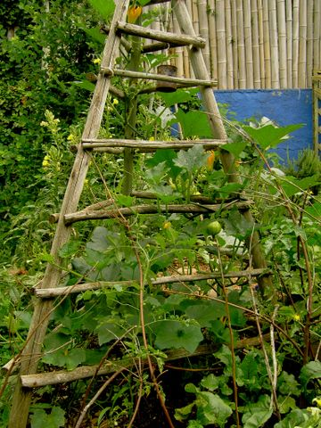Vertical Gardening.  Repeat window shape when constructing the garden trellis in shapes such as circles and gothic. Easy to bend when made from willow branches.