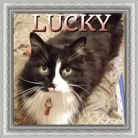 Hello, I live up to my name Lucky. I was lucky enough to have a family that loved me very much for 15 years, but then they moved overseas and they knew that would be too hard on me. Then I was lucky enough that The CAWS promised my family that they would find another family that would love me just as much. Got room for a VERY sweet, doesn't show her age at all Gal such as myself? Fill out an application for me today at www.cawsab.org.