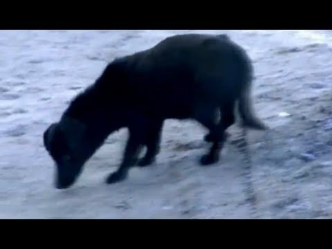 ▶ Perro ayuda a niña de tres años a sobrevivir la noche helada - YouTube