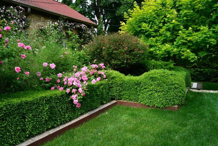 ... herbes Aromatiques sur Pinterest  Jardins dherbes en pots et Jardin