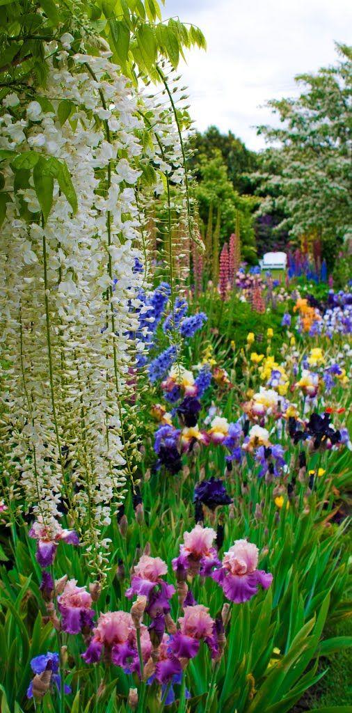 Schreiner's Iris Garden JC_rocks photo in panoramio -- Bisit Schreiner's in Salem Oregon in May to see their full catalog in bloom and to pick.