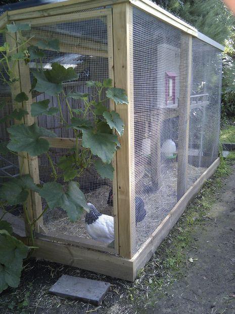 Best 25 building a chicken run ideas on pinterest for Enclosed chicken run plans
