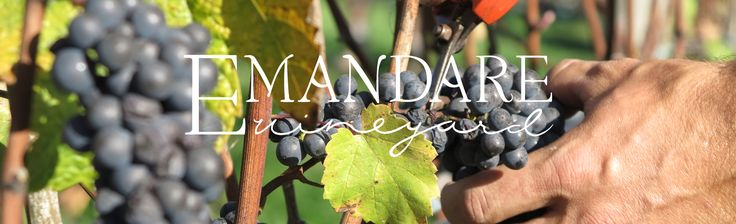 A new winery in the Cowichan Valley, Emandare.
