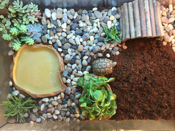 17 meilleures id es propos de terrarium pour tortue sur pinterest enclos pour reptiles. Black Bedroom Furniture Sets. Home Design Ideas