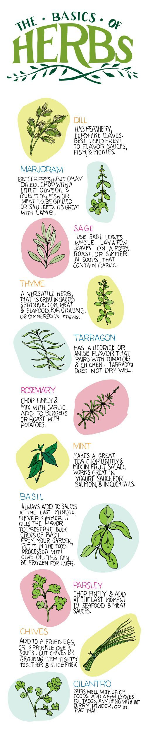 The Basics of Herbs (Infographic)