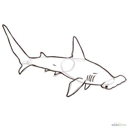 How to draw a hammerhead shark - photo#44