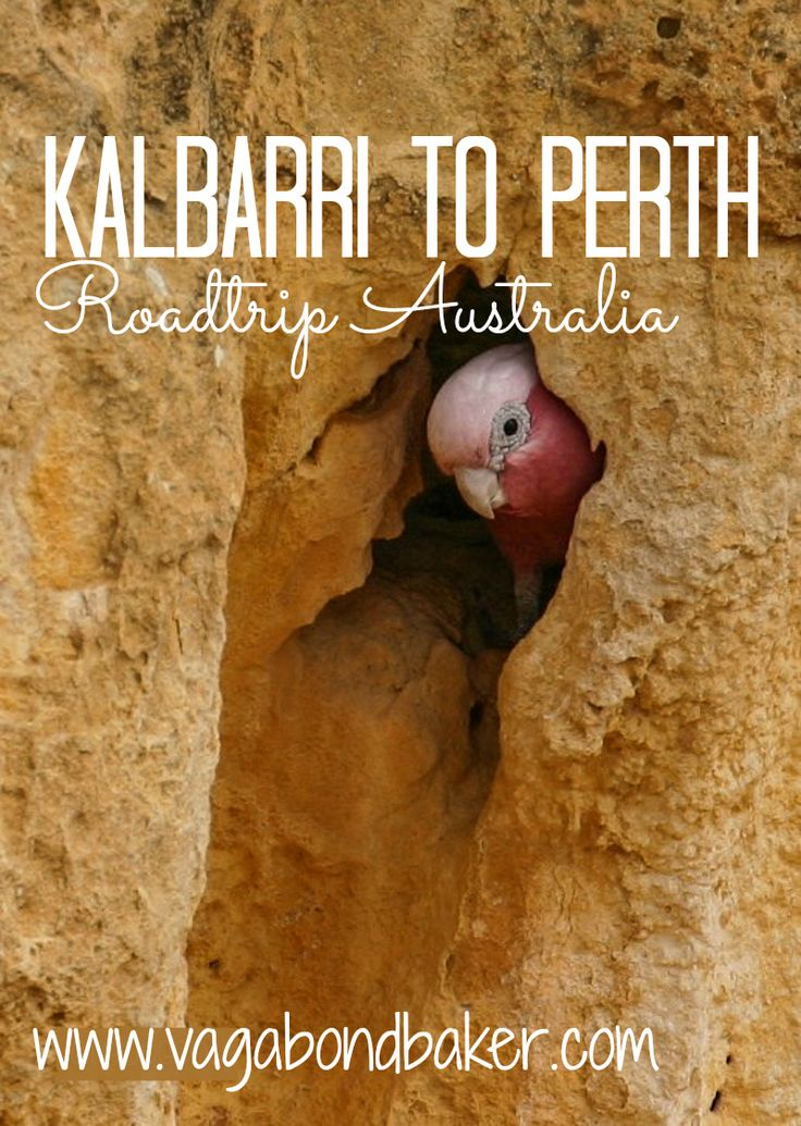 Kalbarri to Perth // Road Trip Australia// A Princess and an encounter with the police