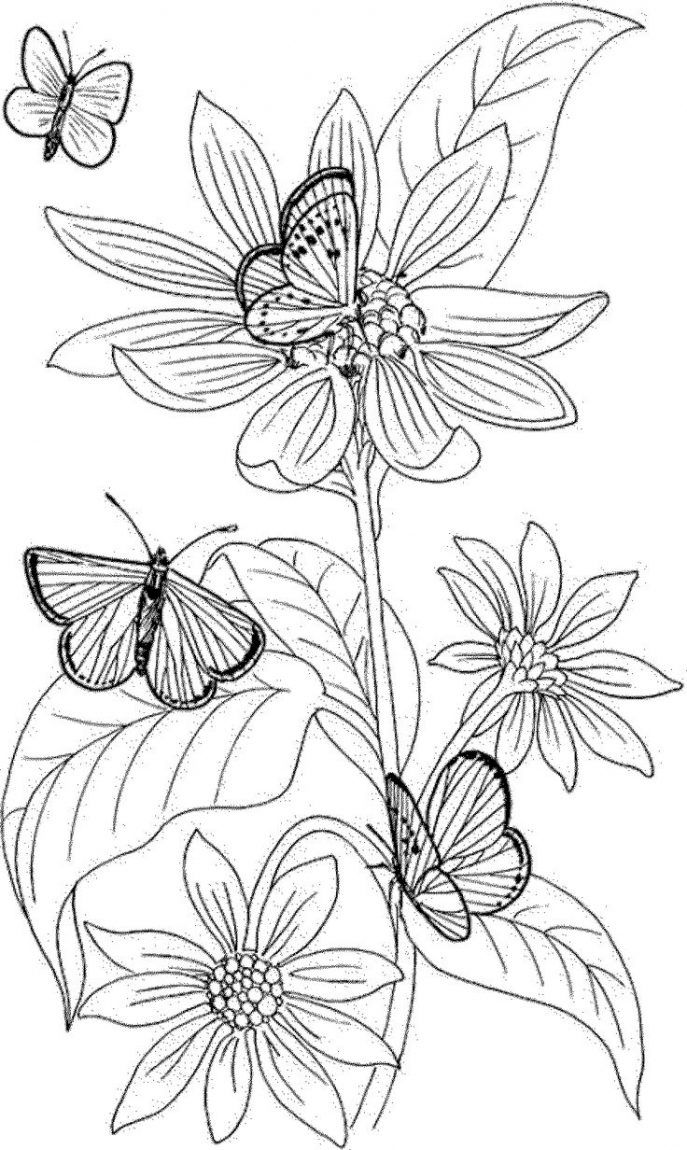 Awesome Marigold Flower Coloring Sheet Gallery Coloring Marigold