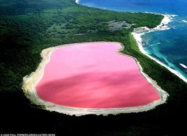 Natural Wonder: Pink Lake in Australia. #travel