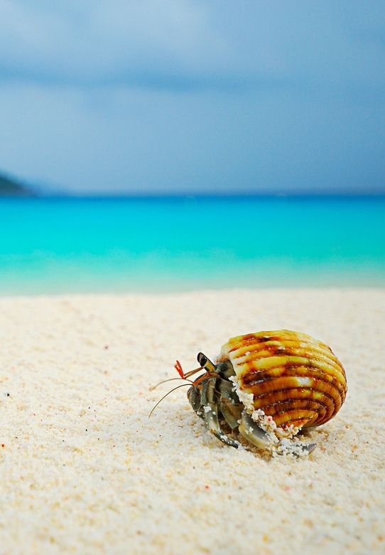 Hermit Crab On Similan Beach Sea Nery Pinterest Creatures And