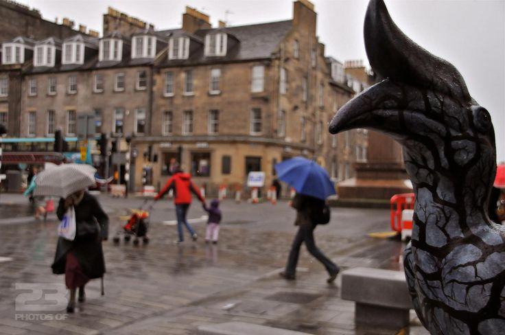 Endangered Species in Edinburgh New Town photo   23 Photos Of Edinburgh