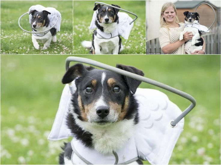 DOLLY HEROES Blind dog that was found hungry and destitute walks again thanks to a halo invention ❤ Dolly
