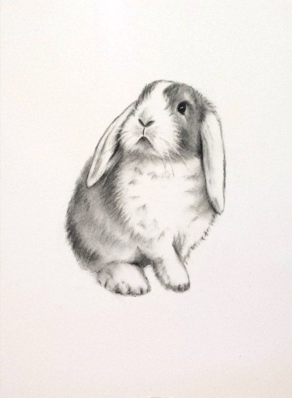 rabbit art original charcoal 5x7 lop eared rabbit drawing bunny sketch