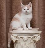 nochnoy-ohotnik | Цезарь - бело-рыжий котик, мурчалка, ласковый, активный, очень игривый и человекоориентированный котенок,- на руках сидеть обожает, готов с них просто не слезать. http://priuyt.wix.com/nochnoy-ohotnik#!-/c1b8n