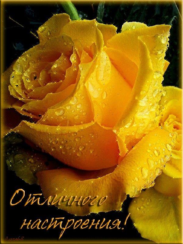 открытки доброе утро солнышко с розами главное препятствие для