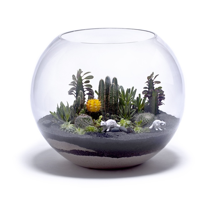 Cactus Terrarium Bowl Terrariums And Miniature Gardening Pinterest Cactus Coffee And