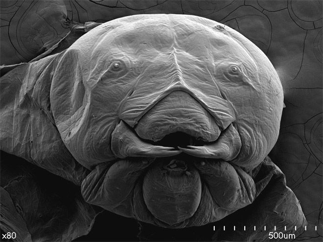 Electron microscope pictures. Cool, beautiful and totally nerdy! (This is the larva of a ground-nesting solitary bee)