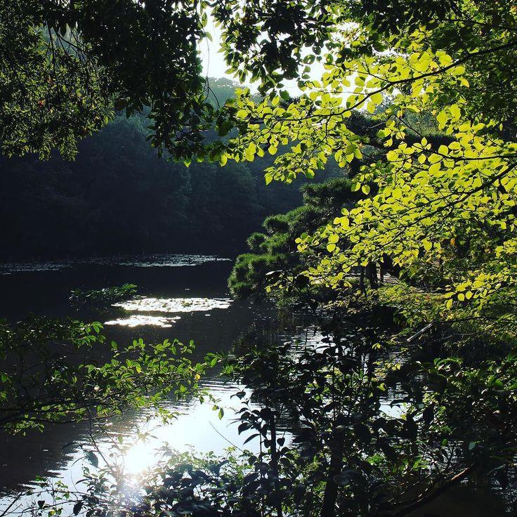 Yoyogi park #yoyogipark #tokyo #japantrip #japan #japanestyle #yoyogi #nature #inspiration #leaves #harajuku