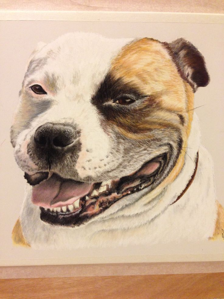 Bob the Staffie in pastels by JG